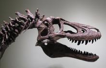Tranh cãi khi rao bán hóa thạch bộ xương khủng long bạo chúa con trên eBay với giá 3 triệu USD