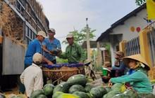 """Lý giải dưa hấu trồng ở Việt Nam được """"lên tem"""" Trung Quốc tại vườn"""