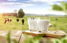 """""""Đấu trường"""" sữa Việt Nam – đất chật người đông, miếng ngon thì khó nhằn"""