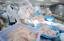Mỹ tăng thuế chống bán phá giá với cá tra Việt Nam