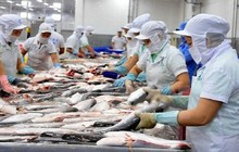 Xuất khẩu cá tra giảm tháng thứ 4 liên tiếp