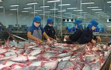 Vĩnh Hoàn: Thị trường Trung Quốc tăng trở lại nhờ phê duyệt miễn thuế xuất khẩu