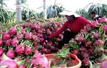 Xuất khẩu rau quả sang Trung Quốc giảm hơn 44%