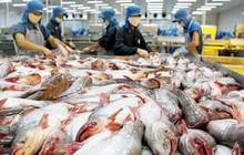 Xuất khẩu cá tra sang thị trường Mỹ giảm mạnh