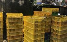 Ngăn chặn hơn 8.000 con gà con giống nhập lậu từ Trung Quốc