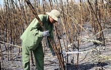 Nông dân gánh nợ vì liên tiếp xảy ra cháy mía