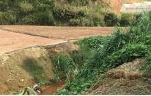 Nhà vườn ở Lâm Đồng thua lỗ vì hoa nhiễm bệnh chết hàng loạt