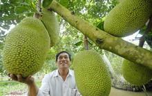 Ngành sản xuất cây ăn trái trước thách thức lớn