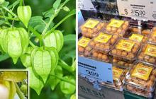 """Một loại quả mọc dại ở Việt Nam nhưng lại được bày bán """"sang chảnh"""" ở siêu thị nước ngoài, vài nơi còn không có đủ cho khách mua"""