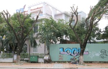 Hàng trăm cây xanh ở Đà Nẵng bất ngờ bị cắt trụi cành
