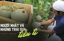 Câu chuyện đằng sau những trái dưa tiền tỉ của Nhật Bản: Căn nguyên từ tình yêu bất diệt của người trồng cây