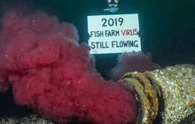 """Suốt 2 năm qua người Canada không dám ăn đến một miếng cá hồi hoang dã, nguyên nhân chính là vì đường ống """"địa ngục"""" ai cũng khiếp sợ"""
