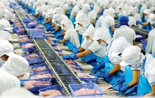 Vĩnh Hoàn (VHC): Trung Quốc chiếm 15% tổng xuất khẩu, sẽ tăng cường đơn hàng EU để bù đắp tác động của virus Covid-19