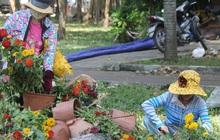 """Sau khi tiểu thương ở Sài Gòn đập chậu, ném hoa vào thùng rác, nhiều người tranh thủ chạy đến """"hôi hoa"""""""