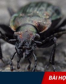 Chuyện thầy tu hóa kiếp thành con bọ và bài học hay dành cho tất cả chúng ta!