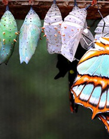 """Câu chuyện """"chú bé và con bướm trong vỏ kén"""" của người Do Thái dạy chúng ta bài học về việc đối mặt với nghịch cảnh"""