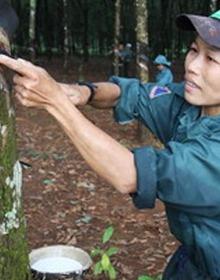 Cao su Đồng Phú (DPR): Sắp chia cổ tức bằng tiền tỷ lệ 20%; dự kiến vượt kế hoạch lợi nhuận năm 2017