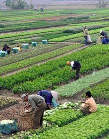 Nông nghiệp Việt trước nguy cơ lệ thuộc nguồn giống nhập khẩu