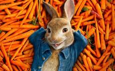 [Quy tắc đầu tư vàng] Câu chuyện ngụ ngôn đàn thỏ và bài học khắc cốt trong đầu tư chứng khoán