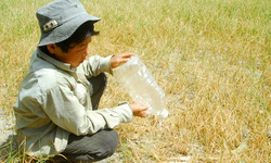Người dân khốn đốn vì nước nhiễm mặn