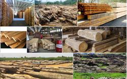 """Tương lai của ngành gỗ không chỉ toàn """"màu xanh"""""""