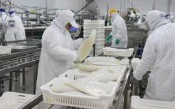 Xuất khẩu mực, bạch tuộc sang Trung Quốc sẽ tăng trưởng dương vào cuối năm