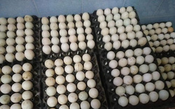 Giá trứng gia cầm giảm tới 40%, người chăn nuôi thua lỗ