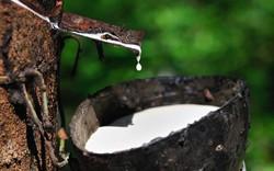 Giá cao su lên cao nhất 1 tuần, dầu thô bật mạnh