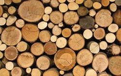 Dự báo xuất khẩu gỗ và sản phẩm gỗ tăng khoảng 15% trong nửa cuối năm 2018