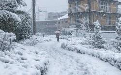Những hình ảnh rùng mình trong bão tuyết kỷ lục tại Tokyo: Hàng trăm chuyến bay bị hủy, xe đạp đóng băng ngoài trời