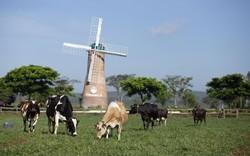 Bỏ xa các đối thủ, Vinamilk là thương hiệu được chọn mua nhiều nhất ngành hàng sữa và tiêu dùng nhanh