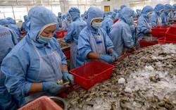 Mỹ gây 'sốc' khi áp thuế bán phá giá 0% với tôm Việt Nam