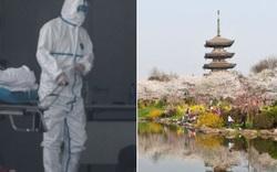 Lo ngại dịch viêm phổi cấp do virus corona, các công ty lữ hành huỷ toàn bộ tour đi Trung Quốc dịp Tết