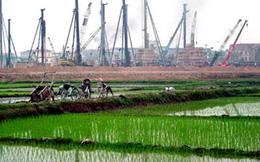 Chính phủ chi gần 500 tỷ đồng cho 9 tỉnh để giữ đất lúa