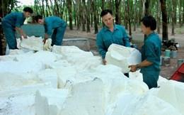 Ngành cao su Việt Nam gặp khó do giá xuống mức thấp kỷ lục