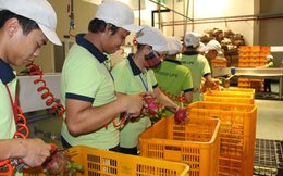 25% doanh nghiệp Nhật rời Trung Quốc đã chọn Việt Nam