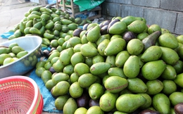 Bơ Việt đổ đống trên vỉa hè, giá rẻ bèo