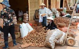 Cấm cửa nông sản Trung Quôc núp bóng hàng Việt