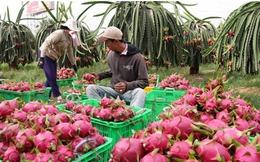 """Nhân Dân tệ mất giá, xuất khẩu nông sản của Việt Nam """"lao đao""""?"""
