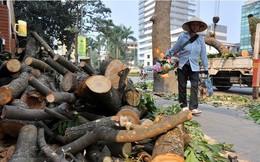 """Dự án thay thế cây xanh Hà Nội: """"Không có tiêu cực, lợi ích nhóm"""""""
