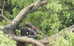 Hà Nội xử lý, kỷ luật tổ chức, cá nhân liên quan vụ thay thế cây xanh