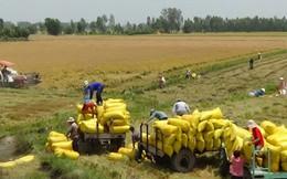 Lập đoàn kiểm tra mua tạm trữ lúa gạo