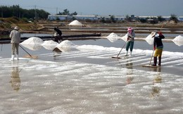 100.000 tấn muối tồn kho, diêm dân Ninh Thuận khóc ròng