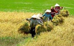 """Nông nghiệp Việt đang """"lâm nguy""""?"""