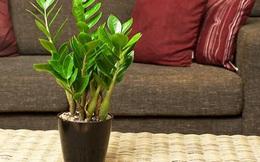 Trồng cây gì ở phòng khách để phát tài?