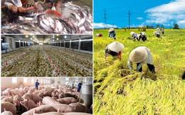 """Con gà """"cõng"""" 14 loại phí, hạt lúa chờ """"vận may"""": Ngành nông nghiệp làm gì để hội nhập?"""