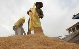 Không thương hiệu, gạo Việt khó cạnh tranh