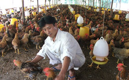 Nông dân đi vay vốn: Ngân hàng ra đủ thứ điều kiện