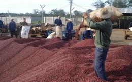 Ngành cà phê Việt Nam thiệt hại nặng vì thông tin thất thiệt