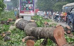 [Thời sự 24h] Kế hoạch chặt 6.700 cây xanh: ''Thanh tra Chính phủ vào cuộc mới rõ''